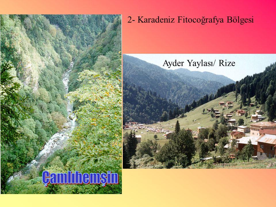 2- Karadeniz Fitocoğrafya Bölgesi