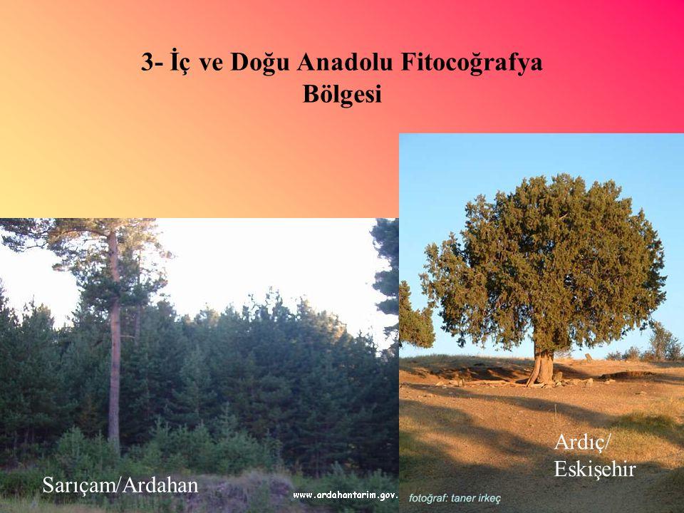 3- İç ve Doğu Anadolu Fitocoğrafya Bölgesi