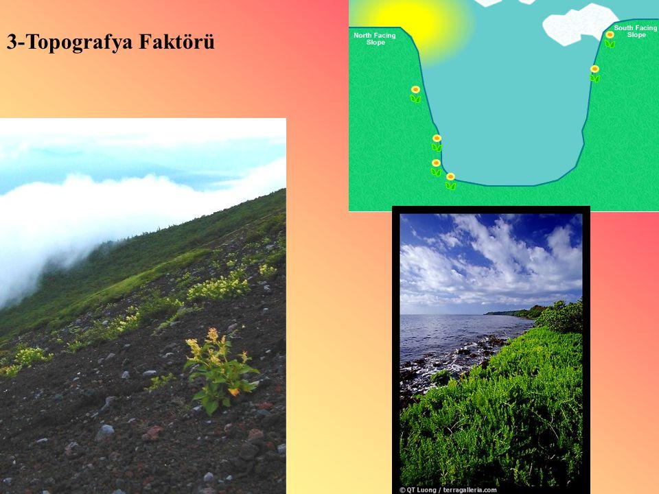 3-Topografya Faktörü