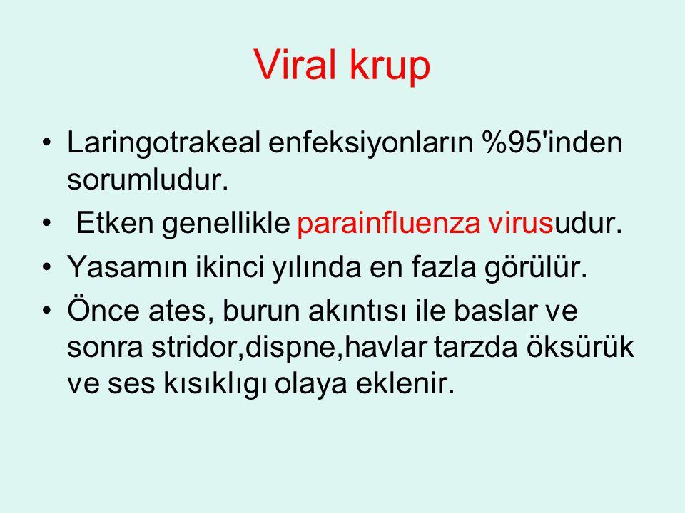 Viral krup Laringotrakeal enfeksiyonların %95 inden sorumludur.
