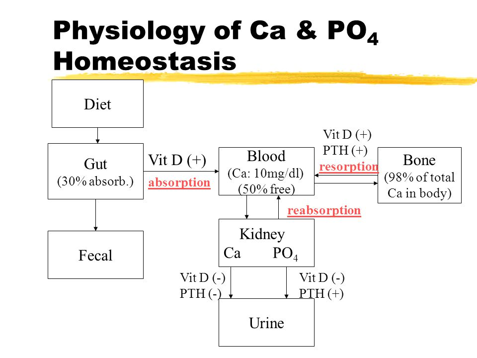 Physiology of Ca & PO4 Homeostasis