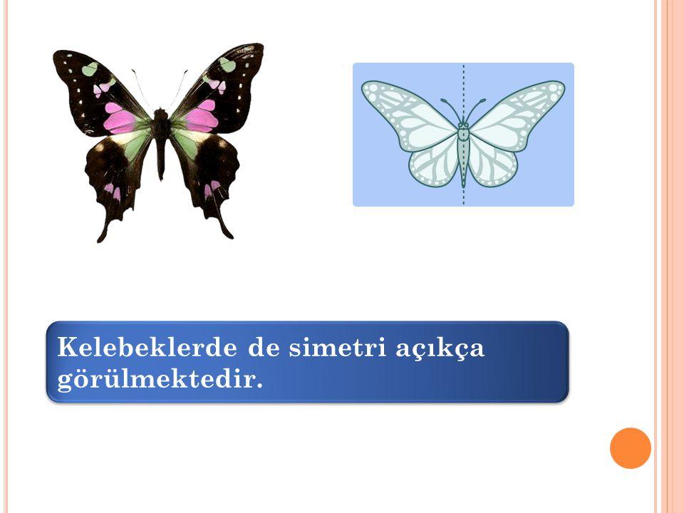 Kelebeklerde de simetri açıkça görülmektedir.