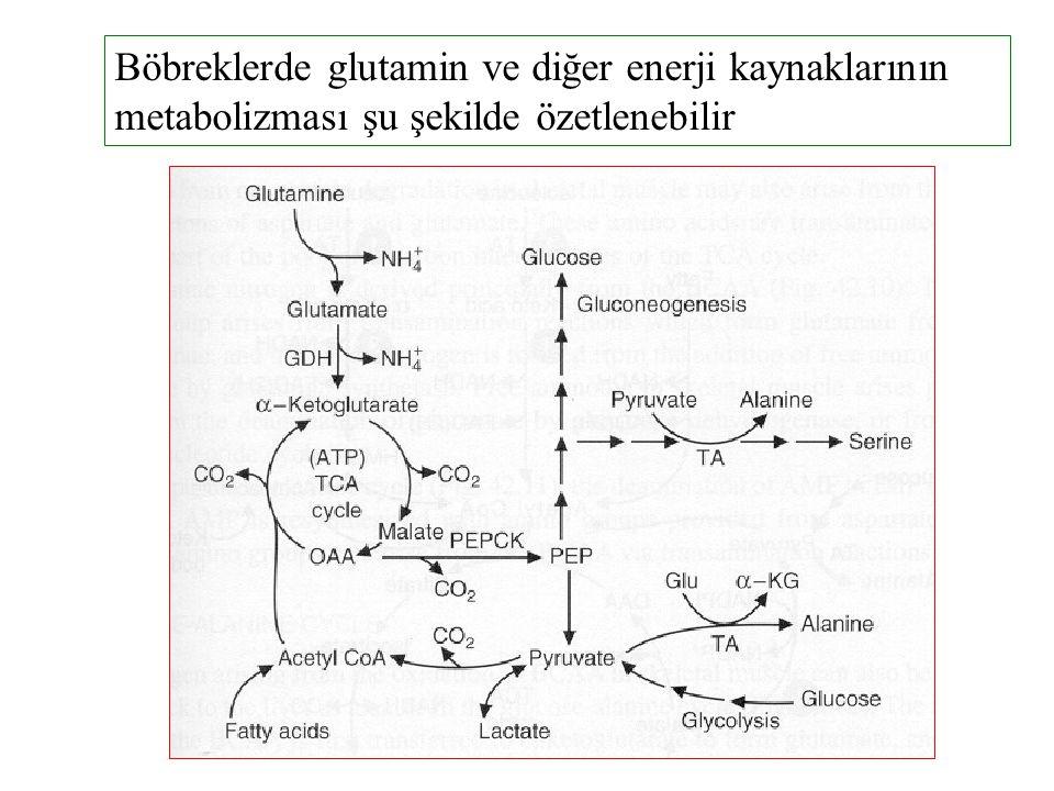 Böbreklerde glutamin ve diğer enerji kaynaklarının metabolizması şu şekilde özetlenebilir