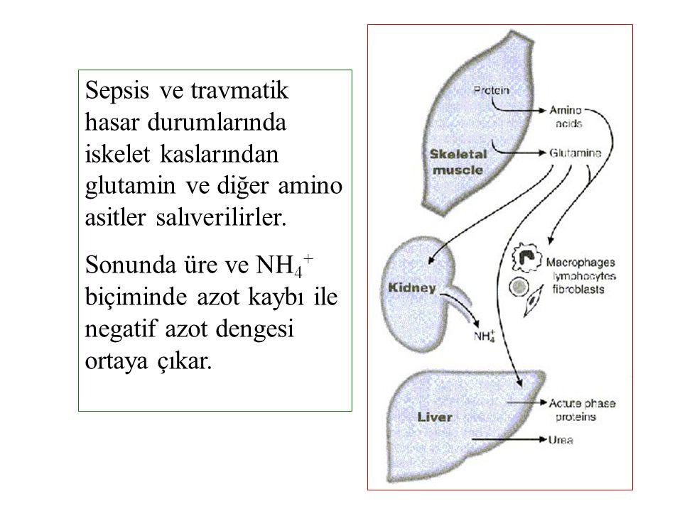 Sepsis ve travmatik hasar durumlarında iskelet kaslarından glutamin ve diğer amino asitler salıverilirler.