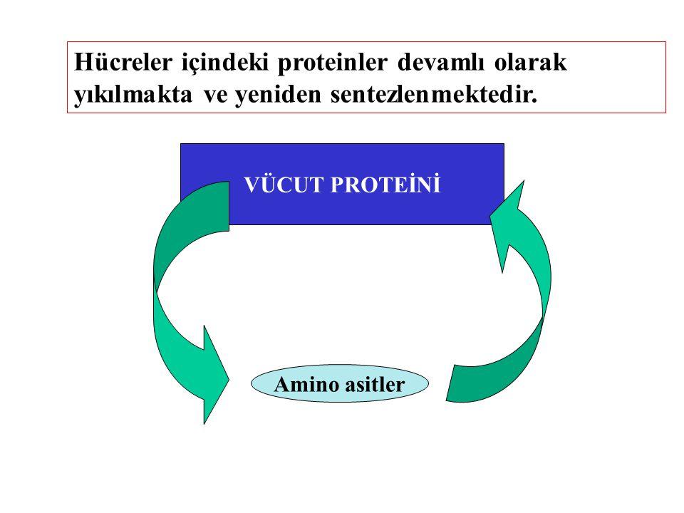 Hücreler içindeki proteinler devamlı olarak yıkılmakta ve yeniden sentezlenmektedir.