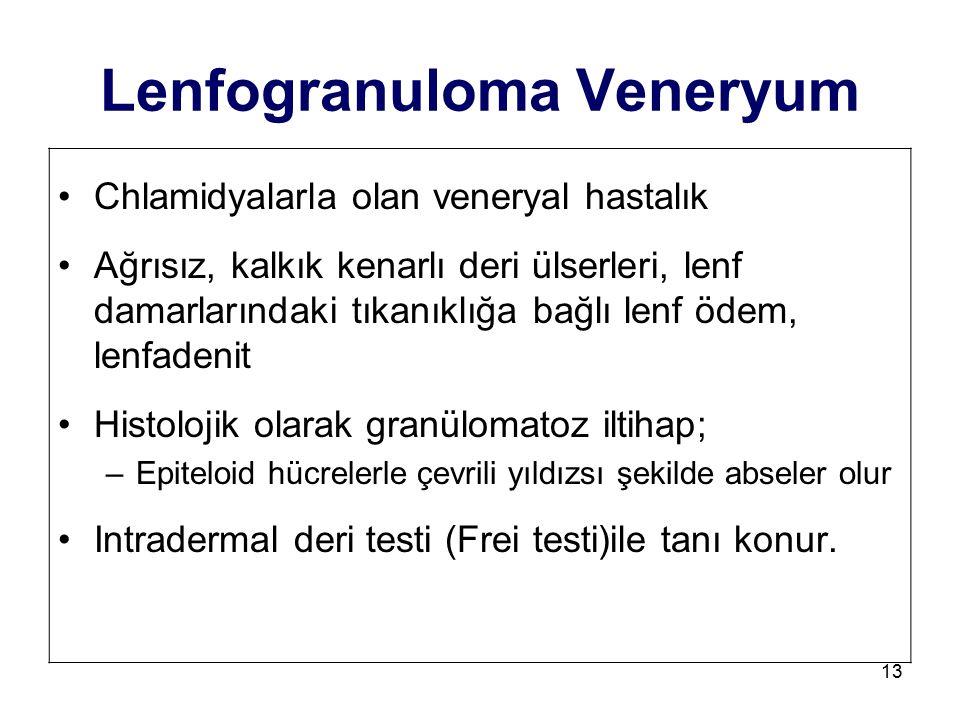 Lenfogranuloma Veneryum