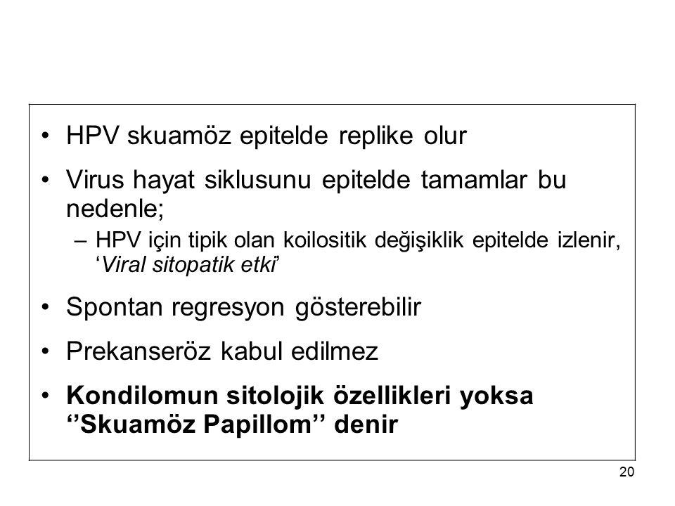 HPV skuamöz epitelde replike olur