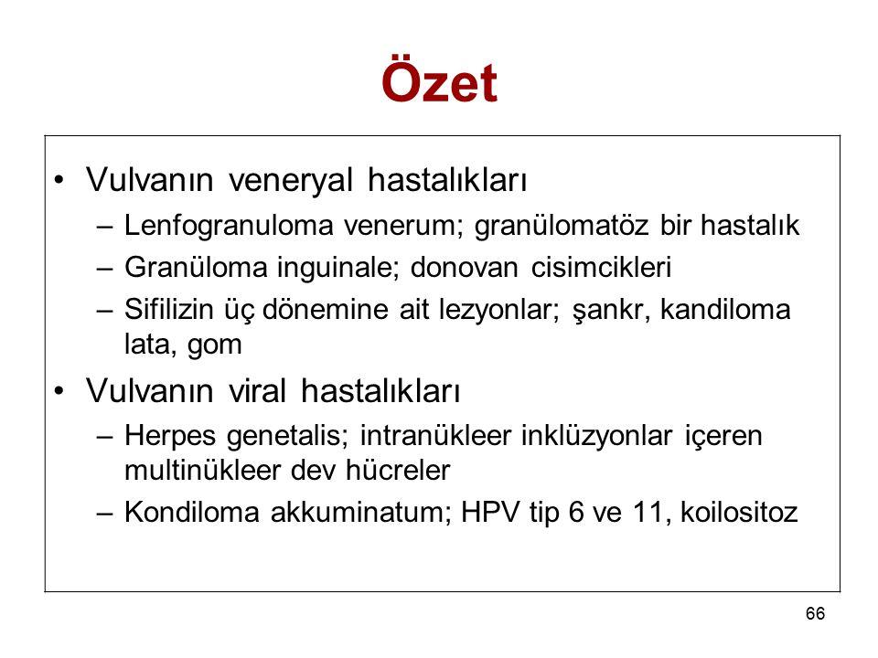Özet Vulvanın veneryal hastalıkları Vulvanın viral hastalıkları