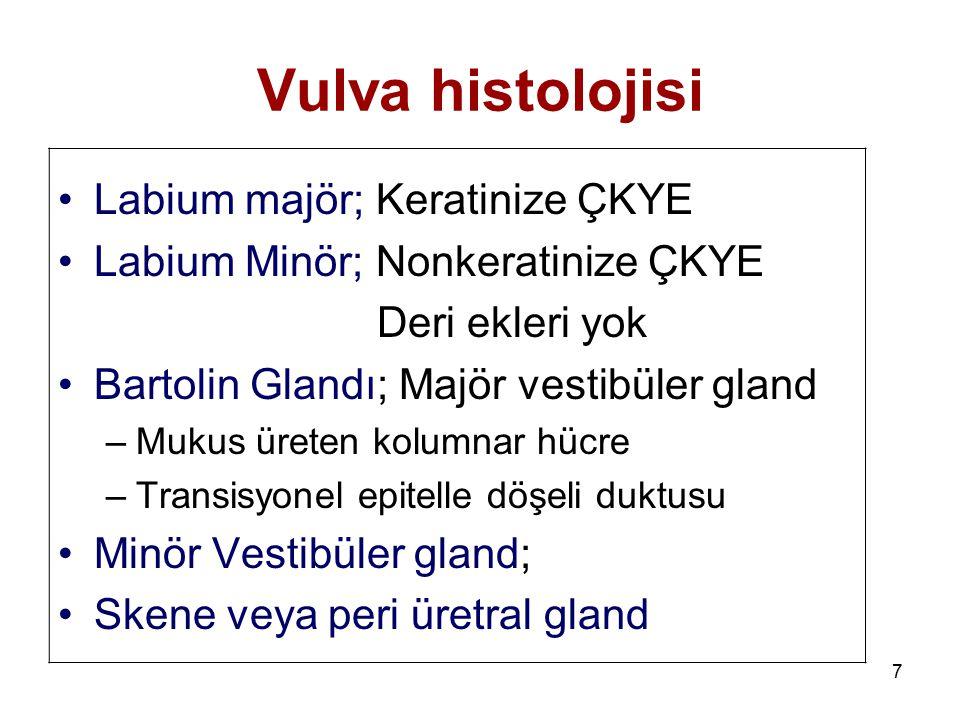 Vulva histolojisi Labium majör; Keratinize ÇKYE