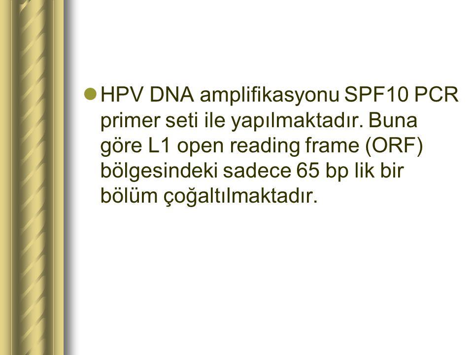HPV DNA amplifikasyonu SPF10 PCR primer seti ile yapılmaktadır