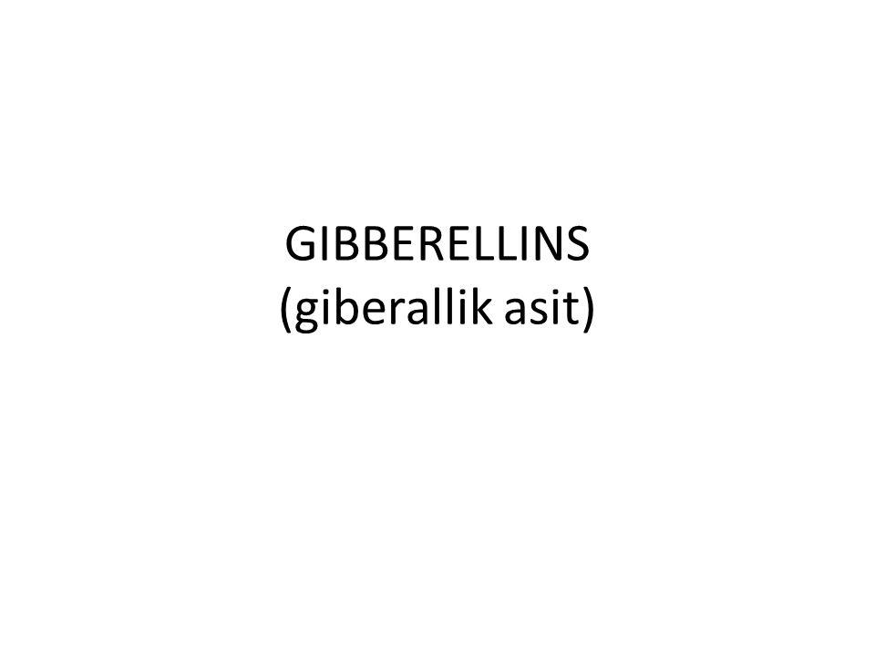 GIBBERELLINS (giberallik asit)