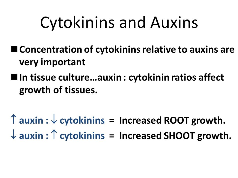 Cytokinins and Auxins Concentration of cytokinins relative to auxins are very important.