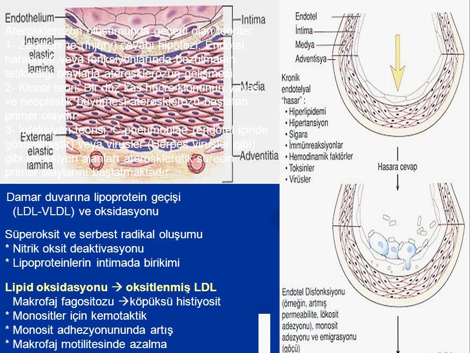 Aterosklerozun oluşumunda geçerli olan teoriler: 1- Zedelenme (Injury) cevabı hipotezi: Endotel harabiyeti veya fonksiyonlarında bozulmanın tetiklediği olaylarla aterosklerozun gelişmesi 2- Klonal teori: Bir düz kas hücre klonunun yavaş ve neoplastik büyümesi aterosklerozu başlatan primer olaydır. 3- İnfeksiyon teorisi: C.pneumoniae (endotel içinde gösterilmiştir) veya virusler (Herpes virusler gibi) gibi infeksiyon ajanları aterosklerotik sürecin primer olaylarını başlatmaktadır
