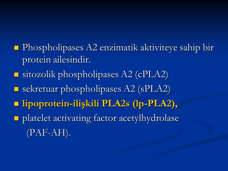 Phospholipases A2 enzimatik aktiviteye sahip bir protein ailesindir.