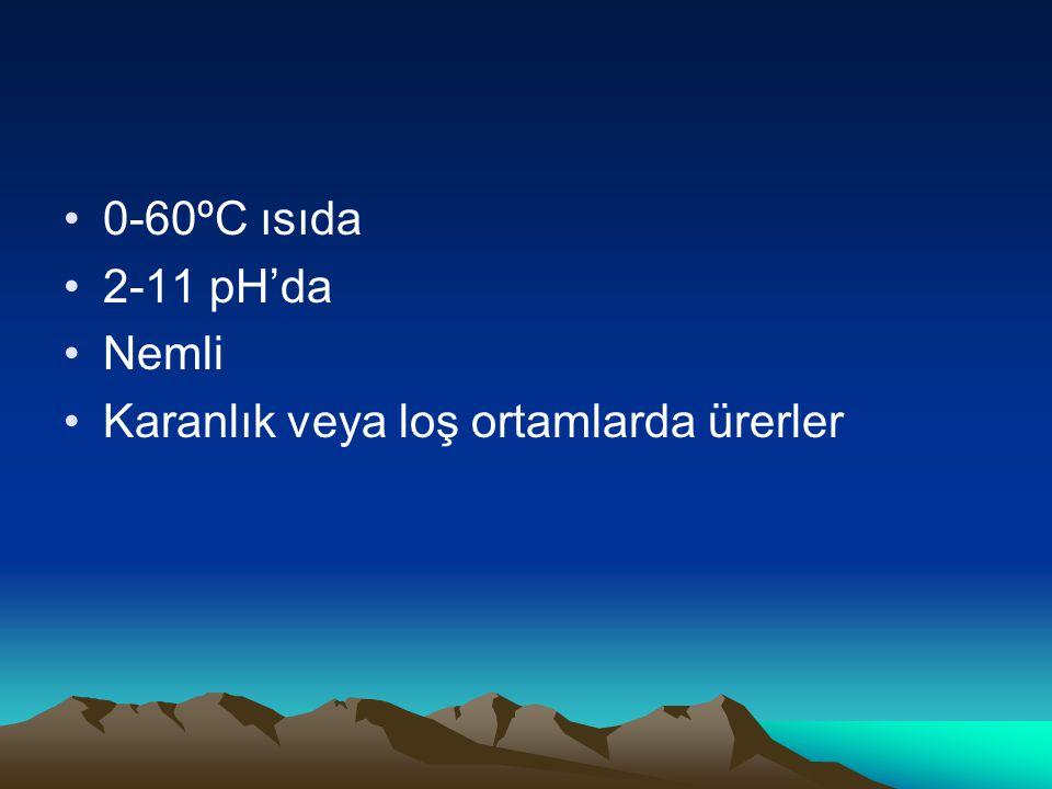 0-60ºC ısıda 2-11 pH'da Nemli Karanlık veya loş ortamlarda ürerler