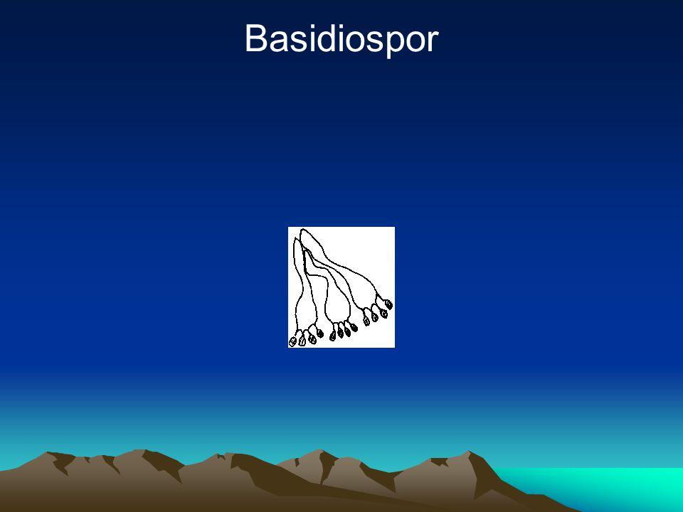 Basidiospor