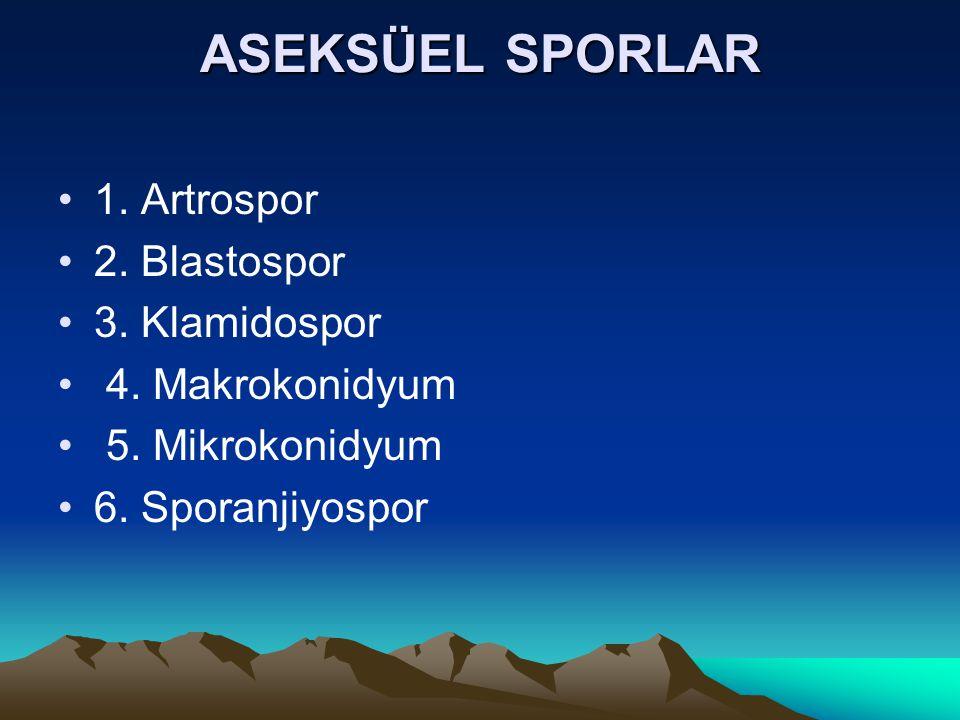 ASEKSÜEL SPORLAR 1. Artrospor 2. Blastospor 3. Klamidospor