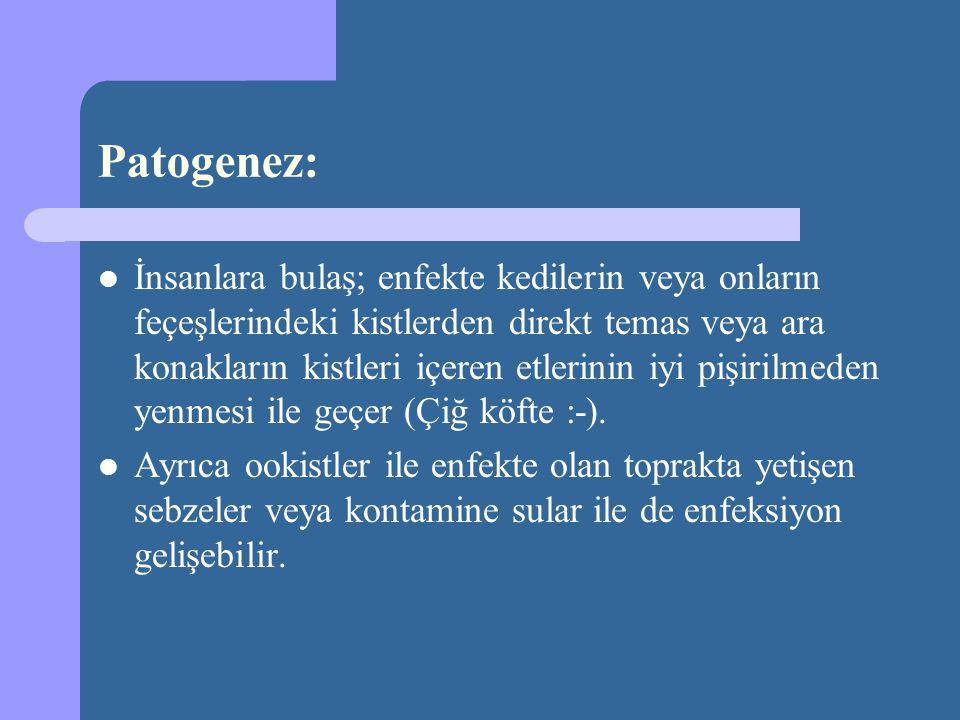Patogenez: