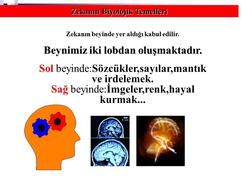 Zekanın Biyolojik Temelleri Zekanın beyinde yer aldığı kabul edilir.