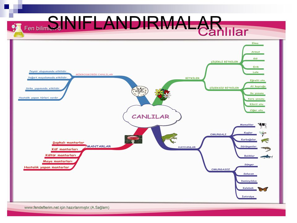 SINIFLANDIRMALAR