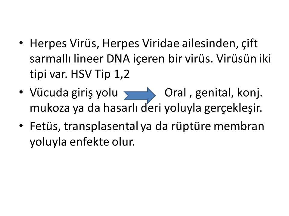 Herpes Virüs, Herpes Viridae ailesinden, çift sarmallı lineer DNA içeren bir virüs. Virüsün iki tipi var. HSV Tip 1,2