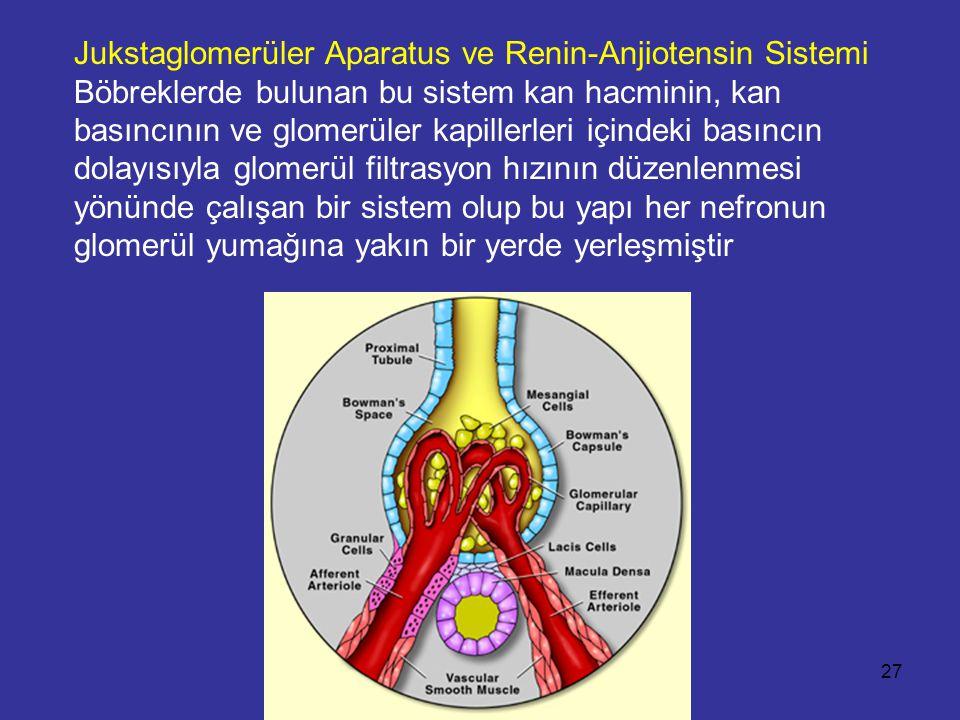 Jukstaglomerüler Aparatus ve Renin-Anjiotensin Sistemi Böbreklerde bulunan bu sistem kan hacminin, kan basıncının ve glomerüler kapillerleri içindeki basıncın dolayısıyla glomerül filtrasyon hızının düzenlenmesi yönünde çalışan bir sistem olup bu yapı her nefronun glomerül yumağına yakın bir yerde yerleşmiştir