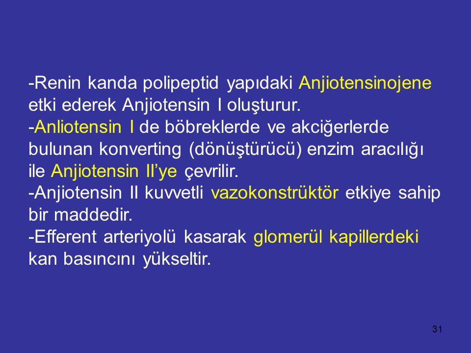 -Renin kanda polipeptid yapıdaki Anjiotensinojene etki ederek Anjiotensin I oluşturur.