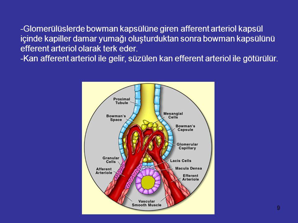 -Glomerülüslerde bowman kapsülüne giren afferent arteriol kapsül içinde kapiller damar yumağı oluşturduktan sonra bowman kapsülünü efferent arteriol olarak terk eder.