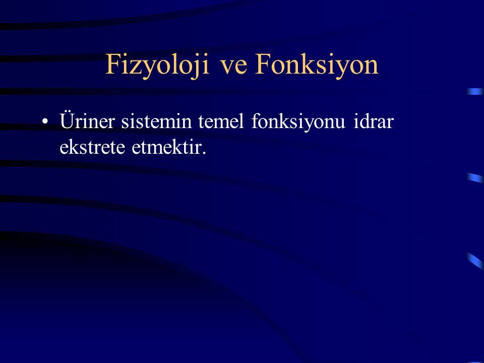 Fizyoloji ve Fonksiyon