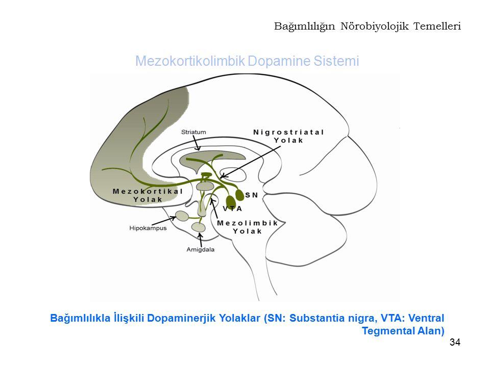 Bağımlılığın Nörobiyolojik Temelleri
