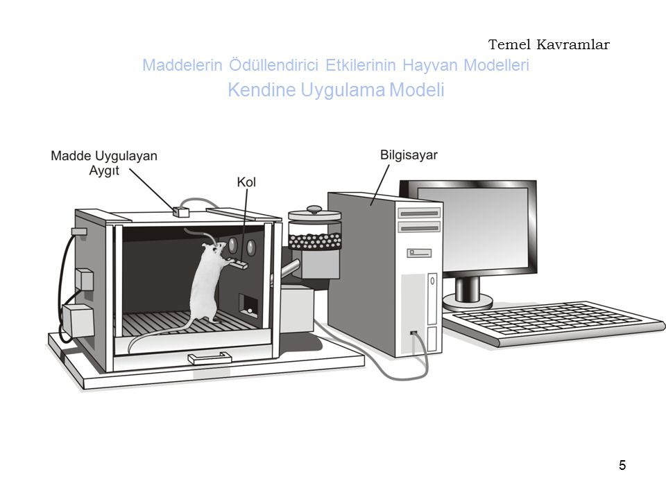 Temel Kavramlar Maddelerin Ödüllendirici Etkilerinin Hayvan Modelleri Kendine Uygulama Modeli