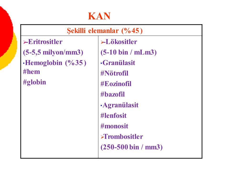 KAN Şekilli elemanlar (%45 ) -Eritrositler (5-5,5 milyon/mm3)