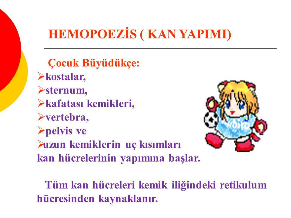 HEMOPOEZİS ( KAN YAPIMI)