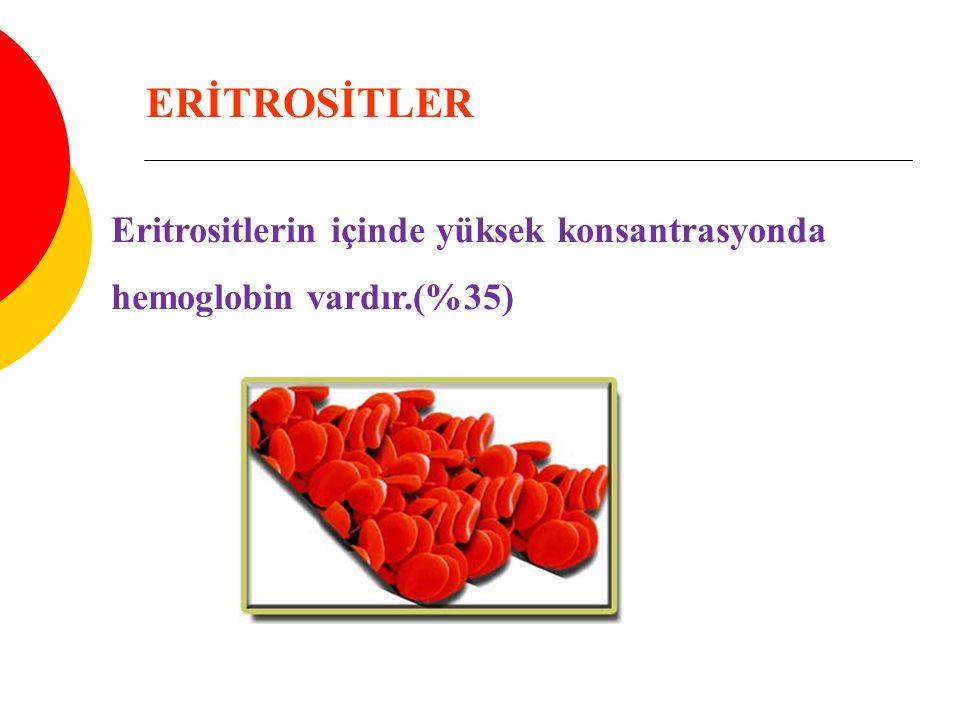 ERİTROSİTLER Eritrositlerin içinde yüksek konsantrasyonda
