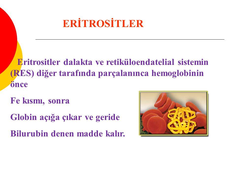 ERİTROSİTLER Eritrositler dalakta ve retiküloendatelial sistemin (RES) diğer tarafında parçalanınca hemoglobinin önce.