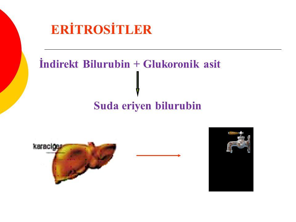ERİTROSİTLER İndirekt Bilurubin + Glukoronik asit