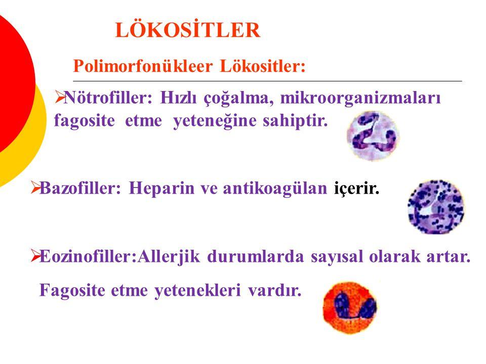 Polimorfonükleer Lökositler:
