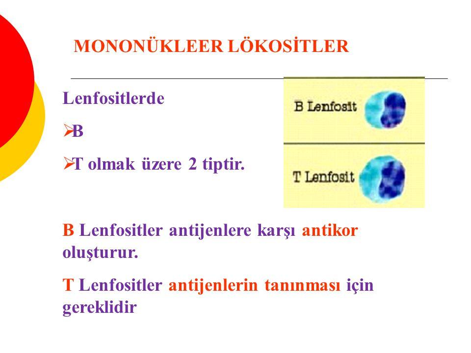 MONONÜKLEER LÖKOSİTLER