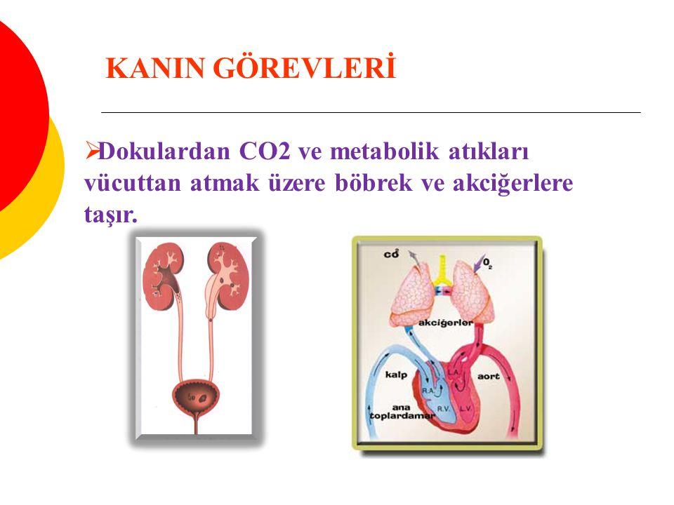 KANIN GÖREVLERİ Dokulardan CO2 ve metabolik atıkları vücuttan atmak üzere böbrek ve akciğerlere taşır.