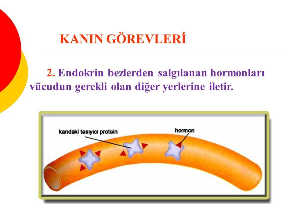 KANIN GÖREVLERİ 2.