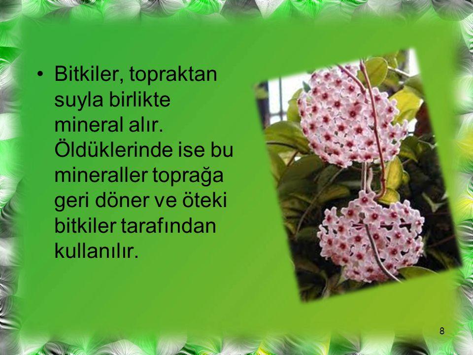 Bitkiler, topraktan suyla birlikte mineral alır