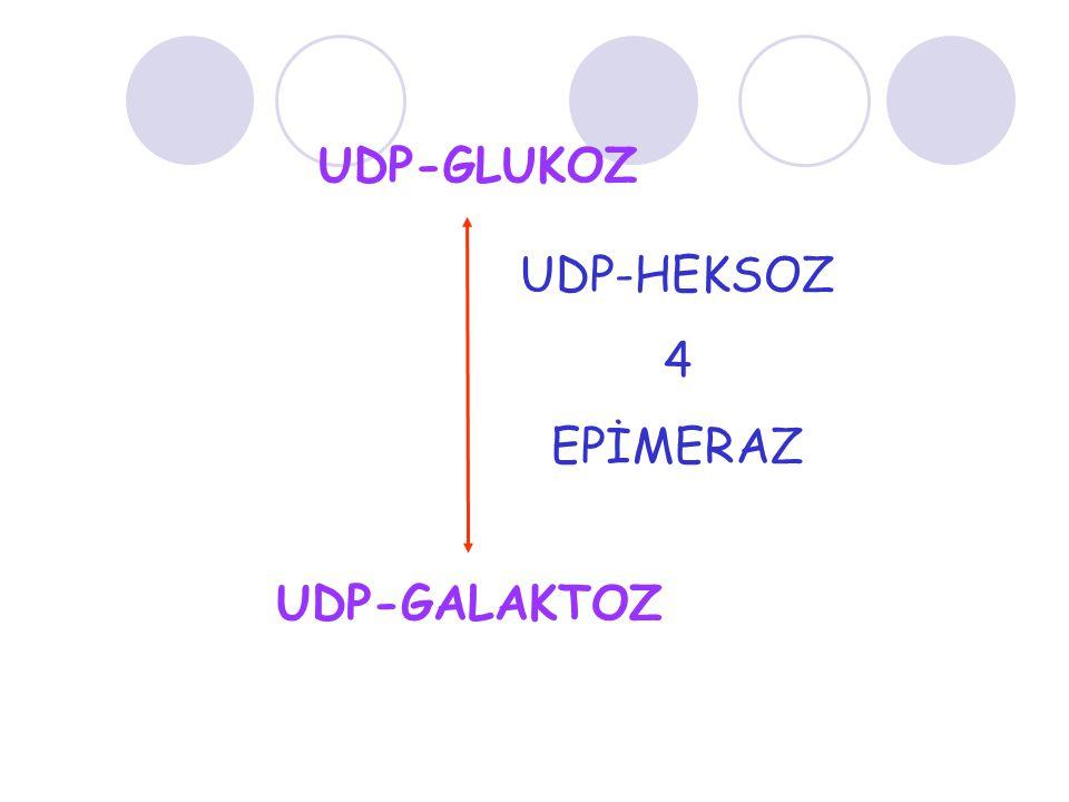 UDP-GLUKOZ UDP-HEKSOZ 4 EPİMERAZ UDP-GALAKTOZ