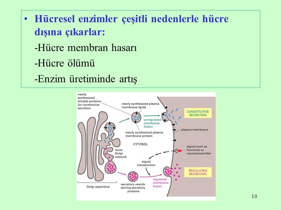 Hücresel enzimler çeşitli nedenlerle hücre dışına çıkarlar: