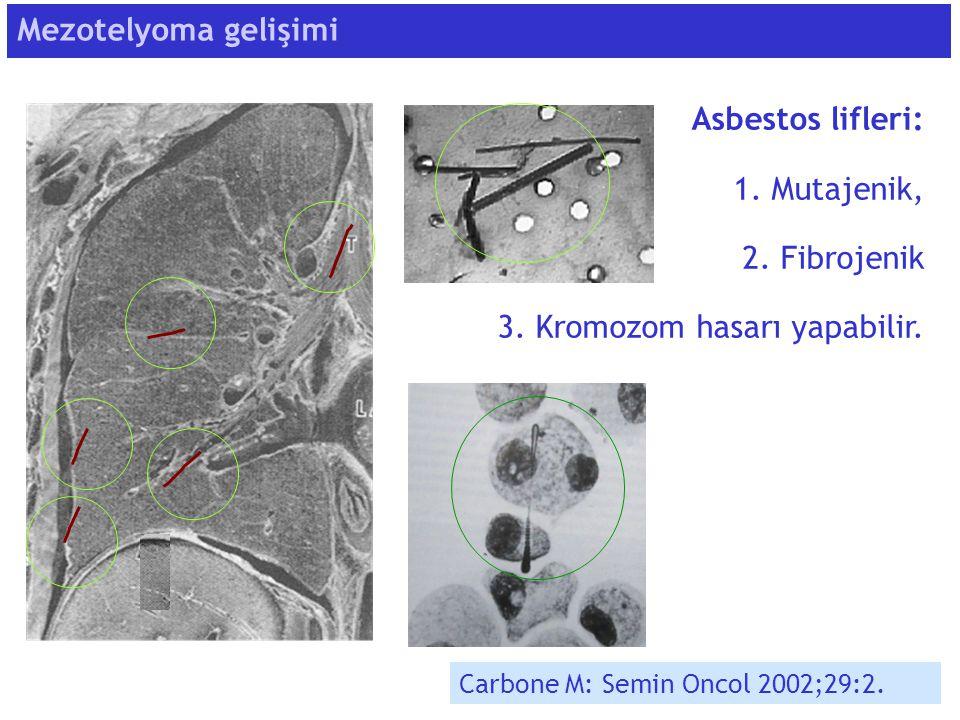 3. Kromozom hasarı yapabilir.