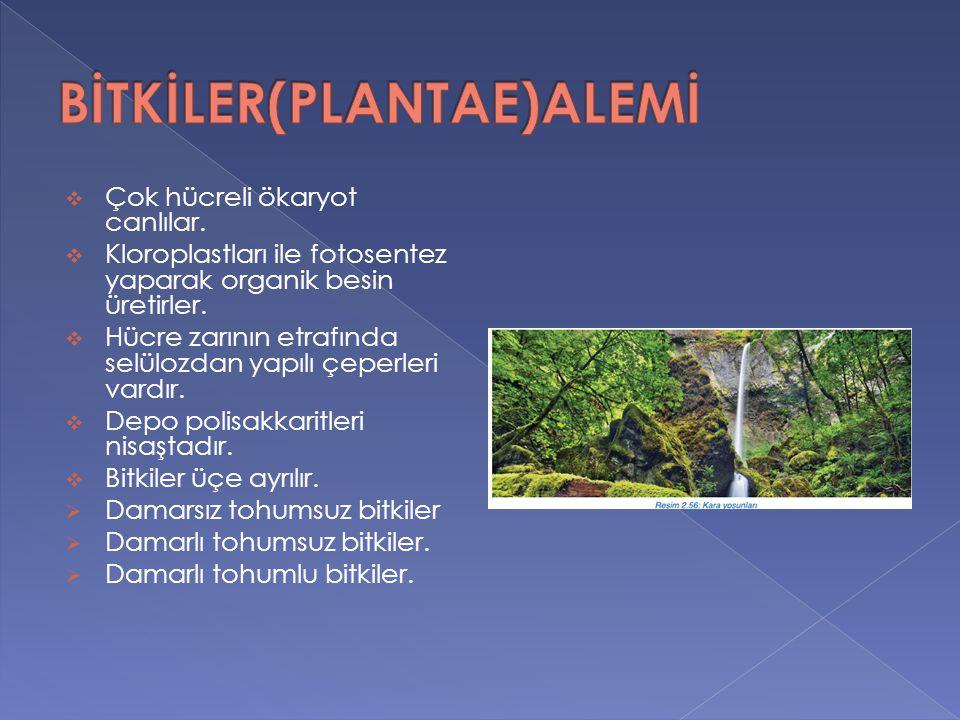 BİTKİLER(PLANTAE)ALEMİ