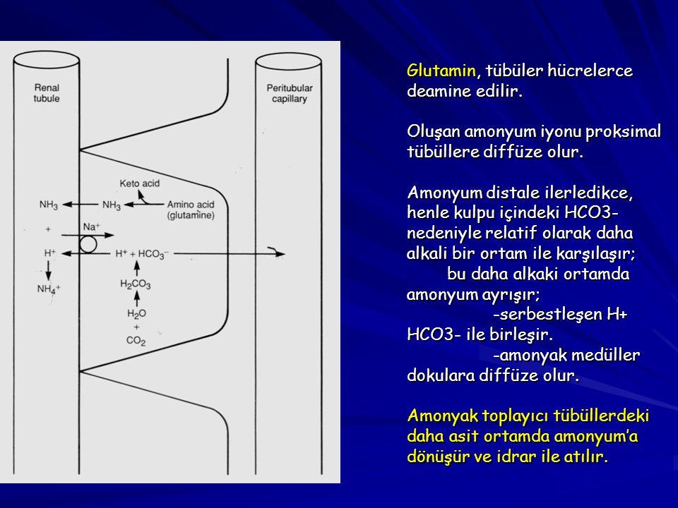 Glutamin, tübüler hücrelerce deamine edilir.