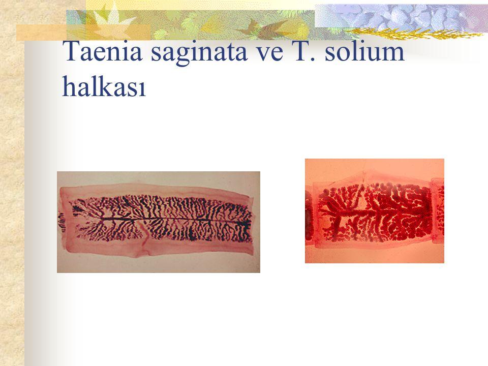 Taenia saginata ve T. solium halkası