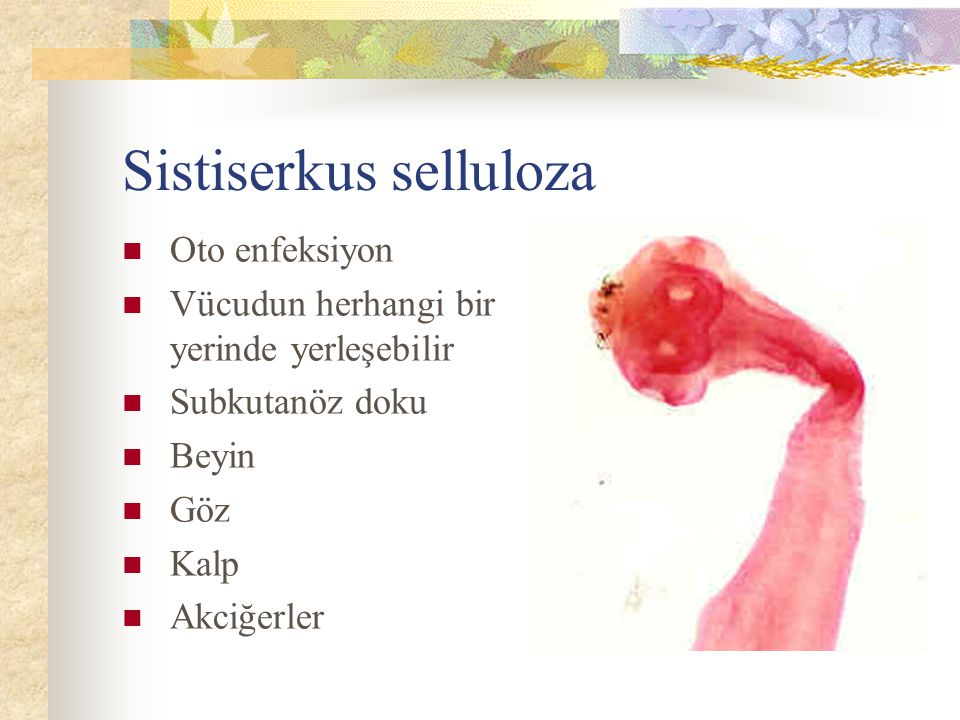 Sistiserkus selluloza
