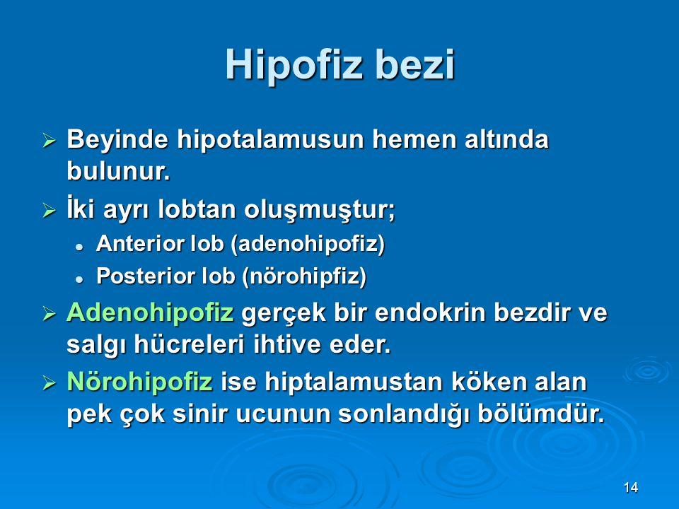 Hipofiz bezi Beyinde hipotalamusun hemen altında bulunur.