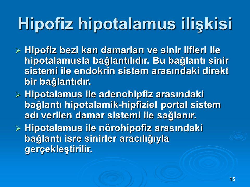 Hipofiz hipotalamus ilişkisi